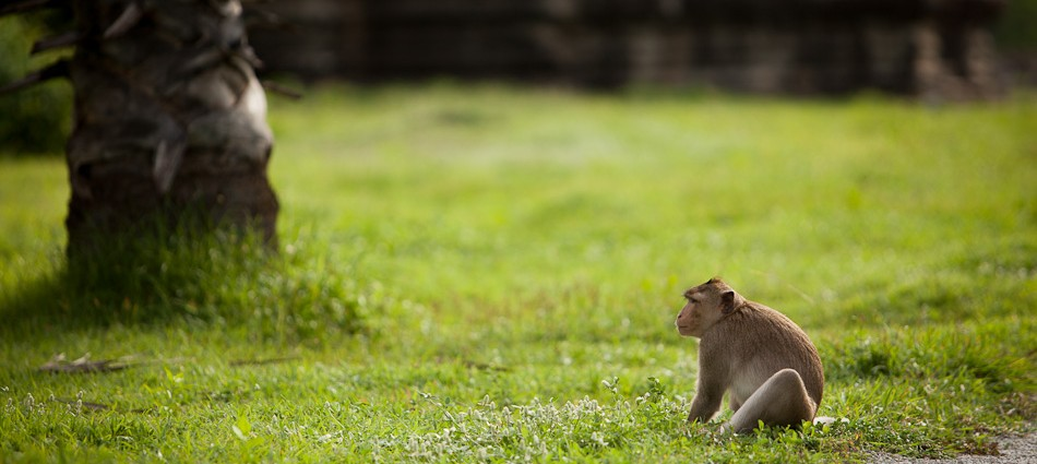 cropped-Monkeys-in-Angkor-Wat-1-of-1.jpg
