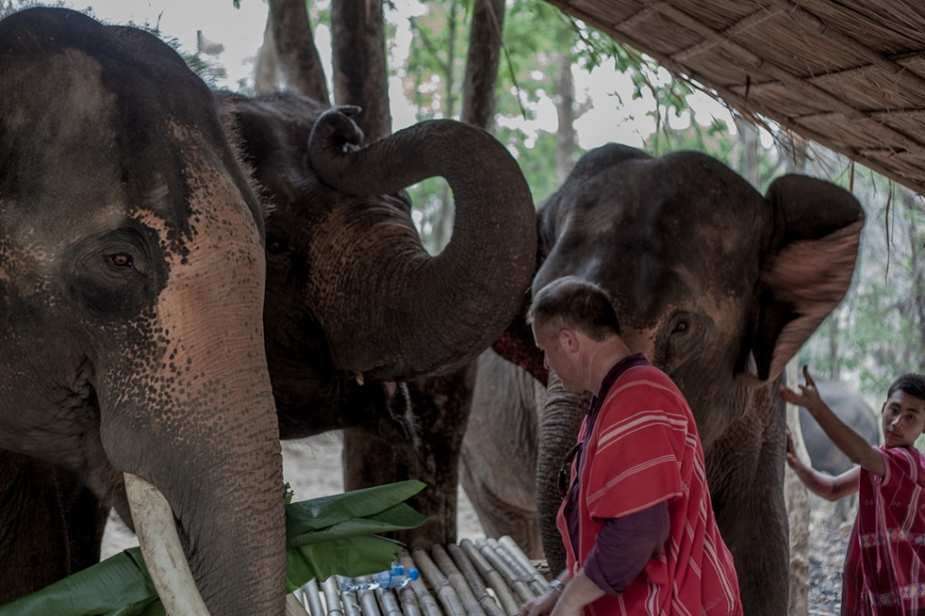 Patara Elephant Farm Set 2 020
