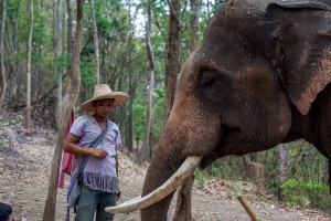 Patara Elephant Farm Set 2 026
