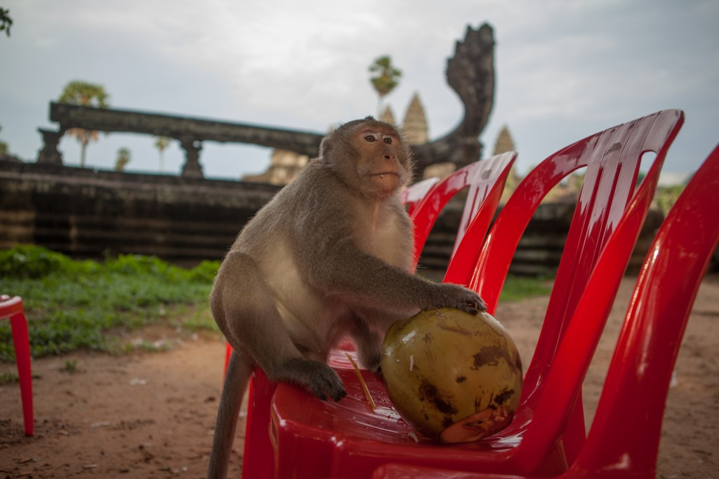 Siem Reap 5 653